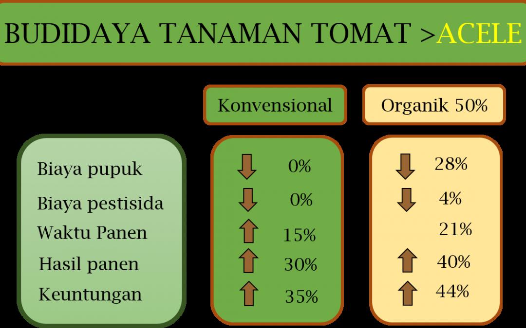 Pemupukan Untuk Pencegahan Busuk Batang Tomat