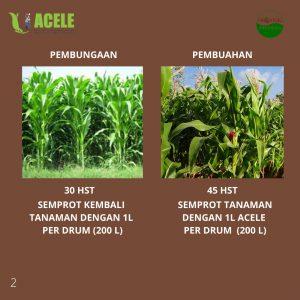 jagung, acele. acele indonesia