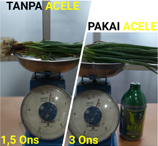 Cara Aplikasi Acele Pada Tanaman Bawang Daun, acele, acele indonesia, pupuk cair, pupuk organik, pupuk cair organik