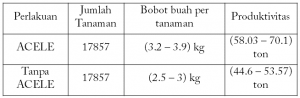 Cara Aplikasi Acele Pada Tanaman Tomat, acele, acele indonesia, pupuk cair, pupuk organik, pupuk cair organik