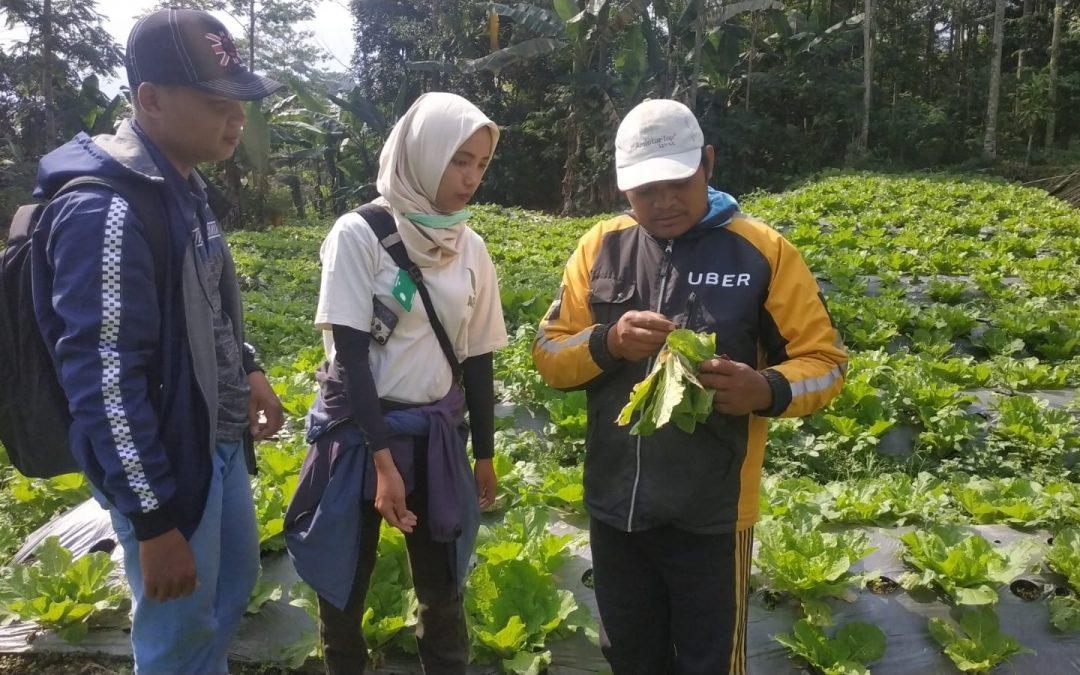 Smart Farming Petani Milenial